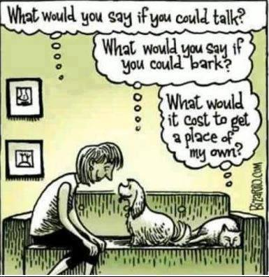 what-would-you-say-if-you-could-talk